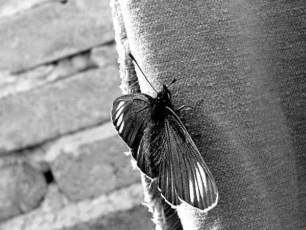 Mariposa Buenos Momentos Blancoynegro Butterfly Blackandwhite Disfrutando De La Vida