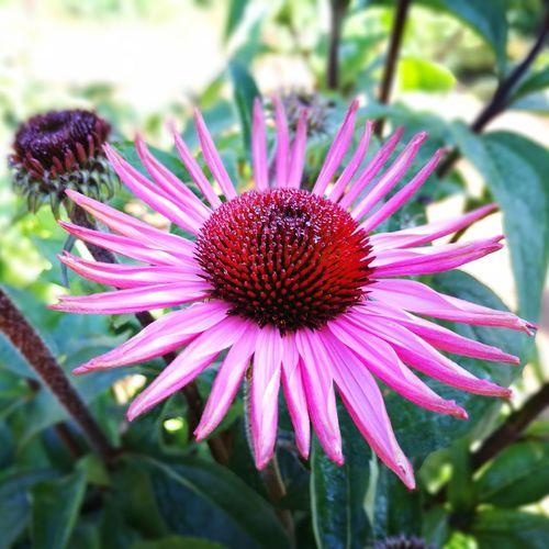 Flower Beauty In Nature Chiang Mai   Thailand Thailand Flawer🌸 Millennial Pink