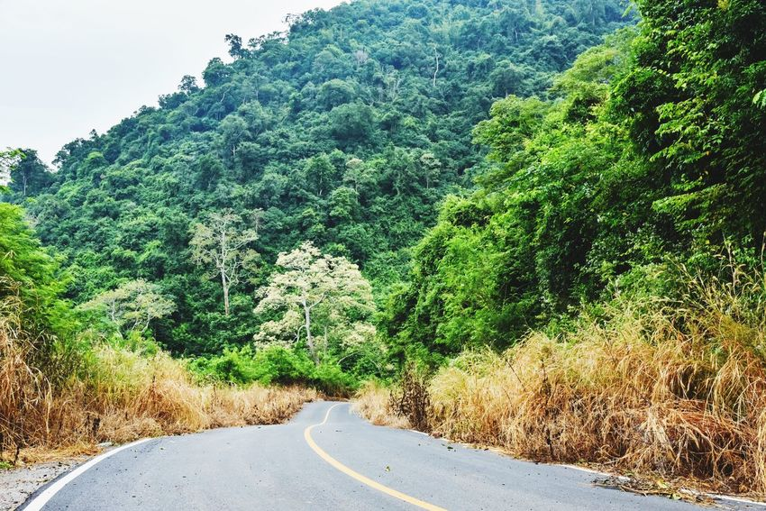 Road The Way Forward Tree Green Color Nature Transportation Growth Curve Plant Day Tranquil Scene No People Tranquility Winding Road Mountain Outdoors Landscape Forest Beauty In Nature Scenics