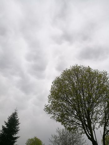 clouds and trees Tree Forest Sky Cloud - Sky Evergreen Tree