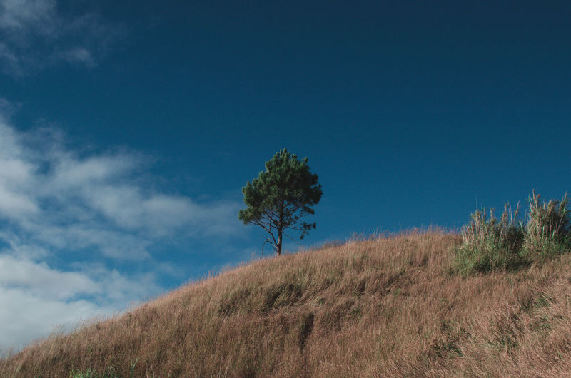 Plant Sky Tree Land Tranquility Nature Grass Growth Tranquil Scene Beauty In Nature Field Day Environment Landscape Blue Scenics - Nature No People Cloud - Sky Hill Outdoors Baguio City Philippines Benguet Tree Alone Tree Alone Feelings