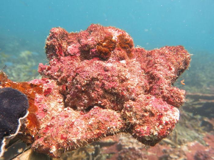 Close-up of dead fish in sea