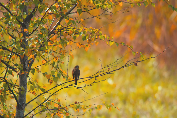Automne🍁🍂🍃 Beauty In Nature Citrouille Day Nature No People Outdoors Rouge Gorge