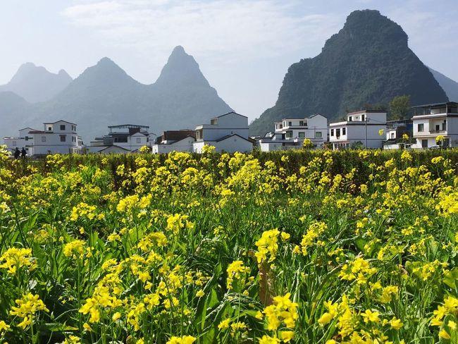 花儿盛开的村庄