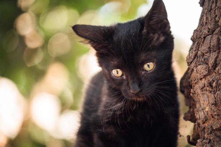 Portrait of black cat by tree