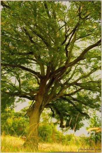 tree of life TreePorn