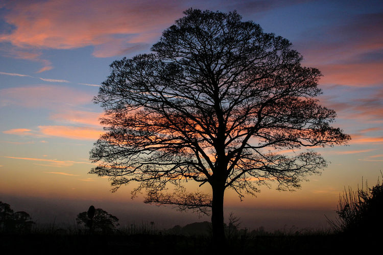 Lickey Hills Worcestershire Uk Bare Tree Beauty In Nature Branch Day Landscape Lone Nature No People Orange Color Outdoors Scenics Silhouette Sky Sunset Tranquil Scene Tranquility Tree