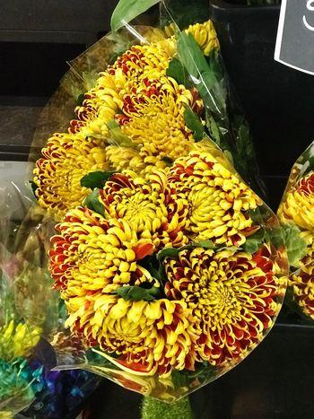 Beautiful Chrysanthemum Chrysanthemum The Power Of Flowers Melbourne Freshness High Angle View Flower Flowering Plant Plant