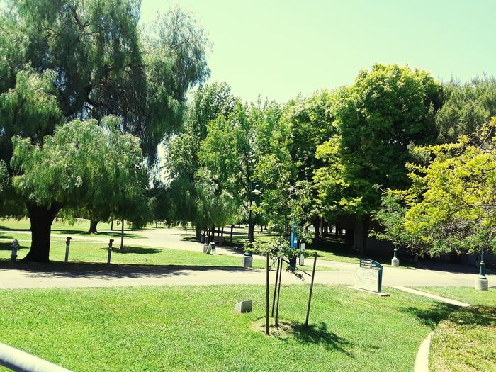 I love this College click on heart if you agree Sac State Sac State Tree Golf Course Sky Grass Green Color Grassland