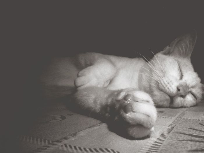 One very Sleepy Cute Cat . isnt She Lovely. the Paws' Pose