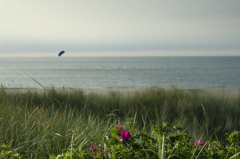 Close-up of grass against beach landscape
