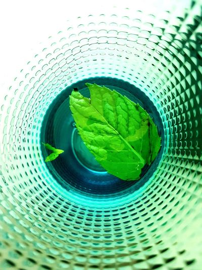 The Week On EyeEm Green Color Drinking Glass Refreshment Freshness Close-up Food And Drink Green Color Reflection Mint Green Mint Photographing Photo Shoot