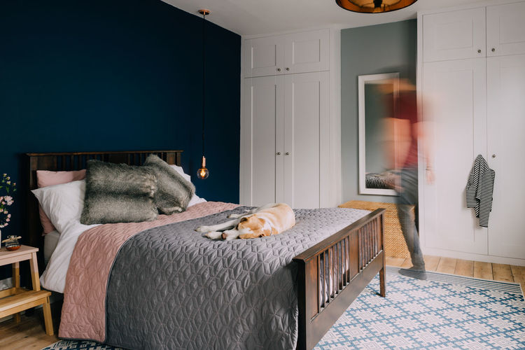 Architecture Beagle Bed Bedroom Cabinet Cosy Cushion Dog Domestic Animals Dresser Home Home Interior Home Showcase Interior Homely Indoors  Interior Design Luxury Mattress Neat No People Pet Pillow Relaxation Sleep Tidy Room