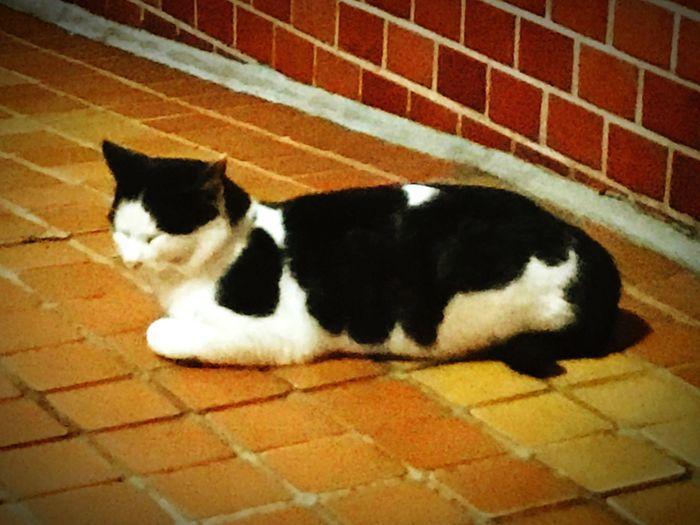 Domestic Cat Domestic Animals Pets Animal Themes One Animal Feline Mammal Cat No People Day
