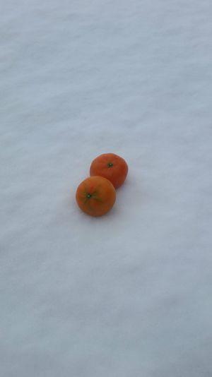 Snow Orange