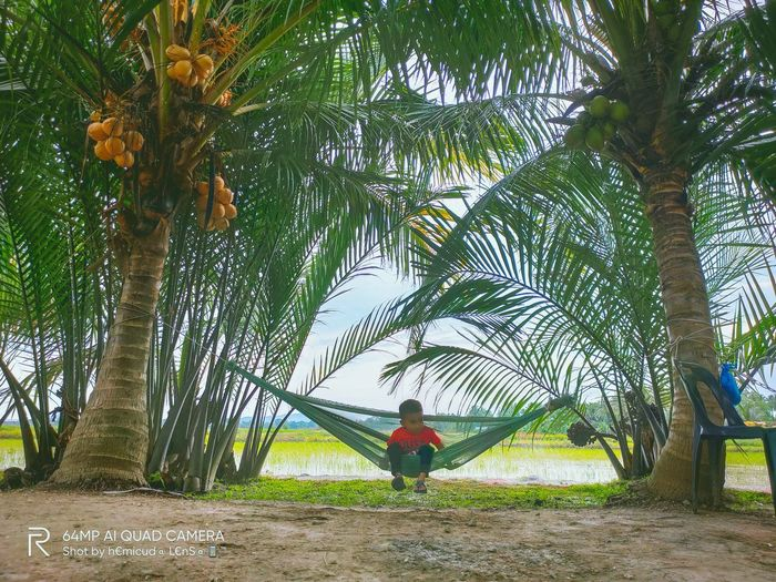 Rear view of man standing by palm tree on field
