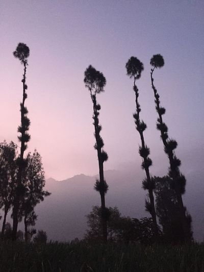 mountain in frame Framing Bromo Plant Tree Sky Growth Tranquility Nature No People Beauty In Nature Silhouette Tranquil Scene Clear Sky Sunset Low Angle View Outdoors Scenics - Nature Dusk Day Land Non-urban Scene Idyllic