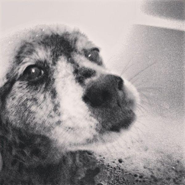 Bathtime Thisguy