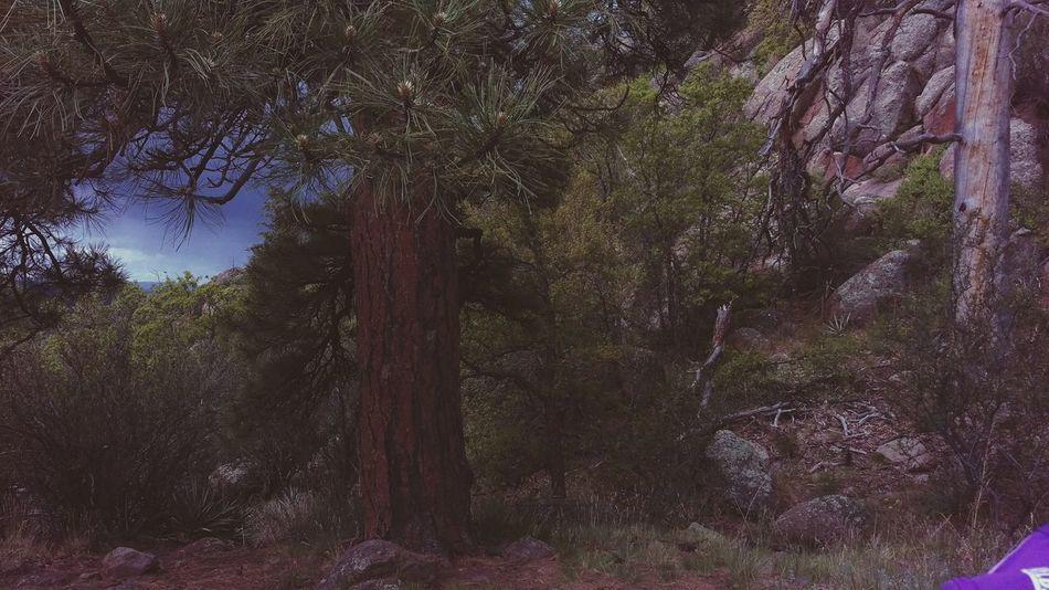 Dark Tree Hike Rainy Day Success Clouds Nature Photography Nature Outdoors Adventure Arizona Mountaim Rain