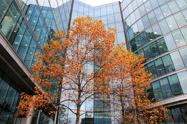 Low angle view of buildings and tree in london city