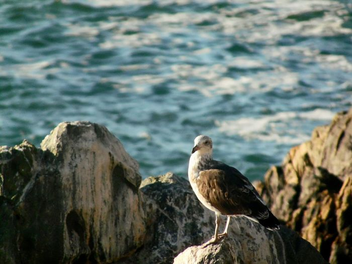 Close-up of bird perching on shore