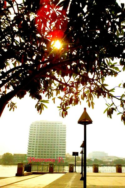 One in 1th park:Rama8th park. Enjoying The Veiw  Landscape,. Silhouettes Of A City , Thailand_allshots , EyeEm Thailand .