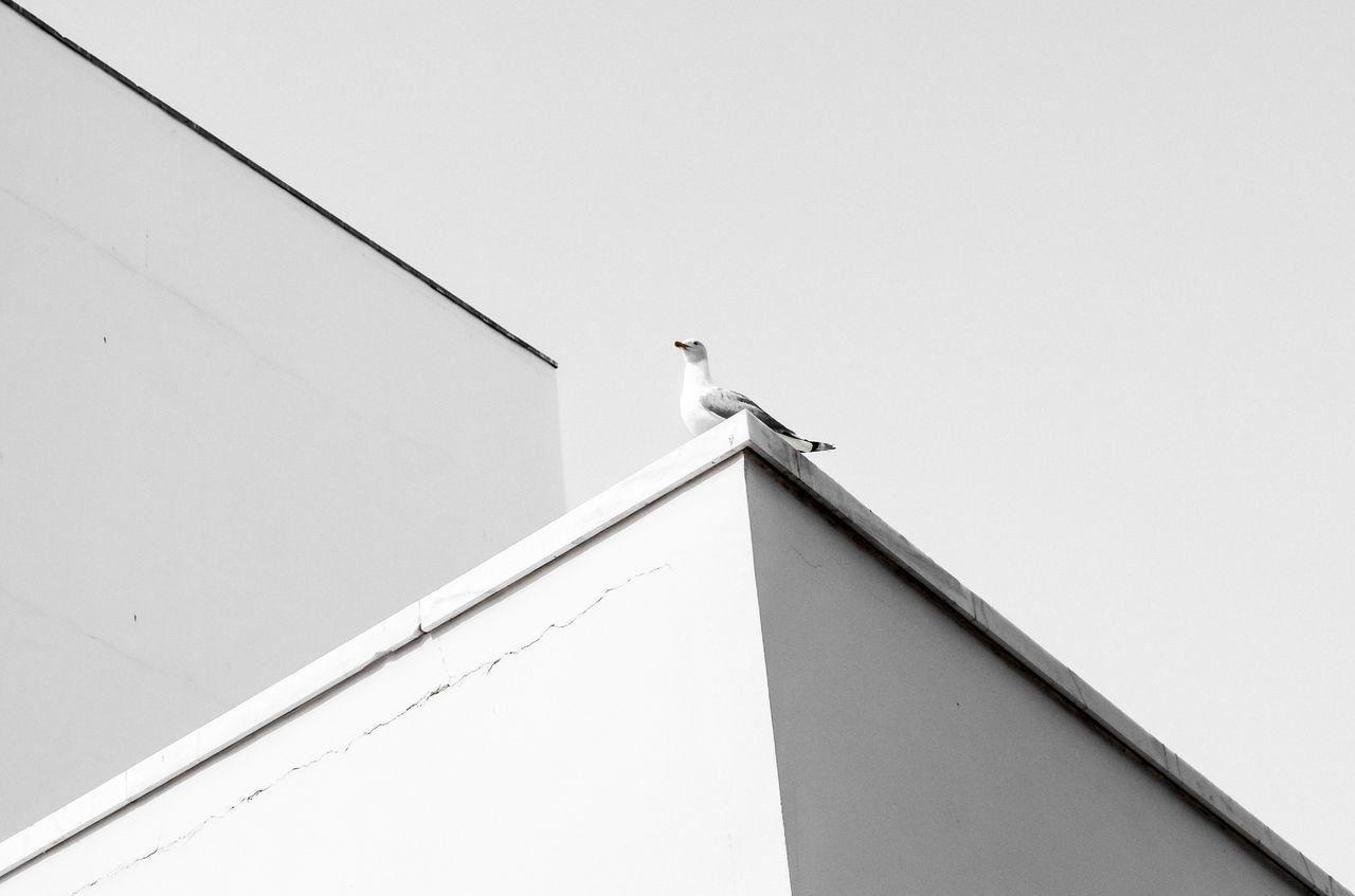 LOW ANGLE VIEW OF SEAGULLS PERCHING ON BUILDING ROOF
