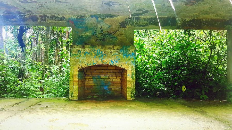 a lil grafitti in the middel of the jungle Graffiti Jungle Fireplace Puertorico Yunque Wild Trees Nature