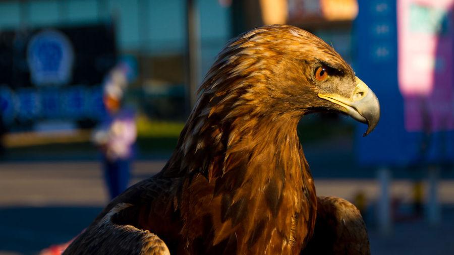 Animal Themes Bird Of Prey Nature No People One Animal