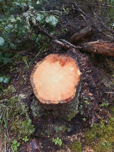 Trees Stump