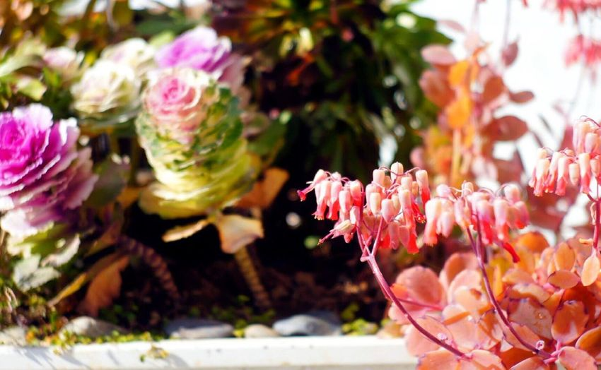 Flower Nature オールドレンズ Oldlens Юпитер 3 Pink Color 🙂 ₍ᐢ•ﻌ•ᐢ₎