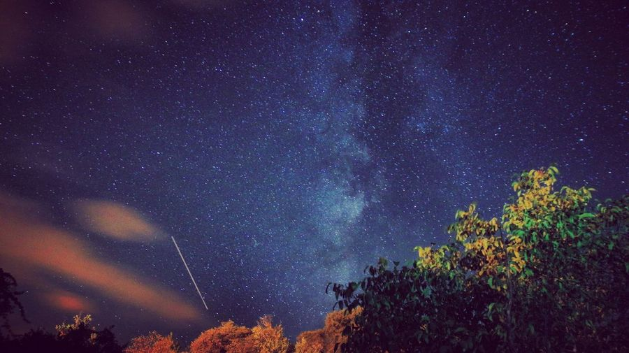 Star - Space Astronomy Galaxy Nature Night Tree Beauty In Nature Scenics Sky Low Angle View Tranquility Milky Way Tranquil Scene Space Outdoors Constellation Science Space Exploration
