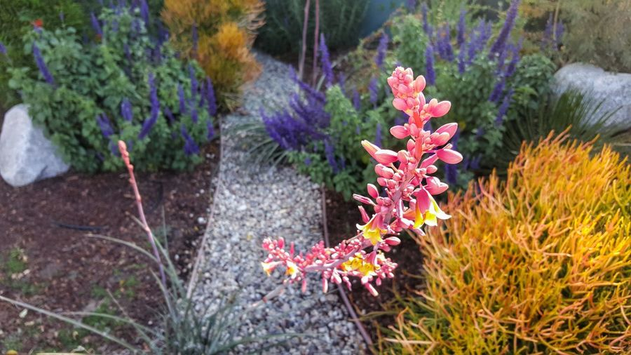 Bend into the Light Capture Tomorrow Flower Flower Head Botanical Garden Summer Beauty Purple Front Or Back Yard Multi Colored Close-up Grass Flowering Plant In Bloom Blossom Plant Life Flowerbed Botany