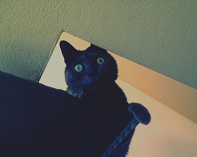 Geometric comix... Domestic Cat Pets Domestic Animals One Animal Animal Themes Feline Indoors  Mammal Whisker Looking At Camera Portrait Home Interior Sitting No People Close-up Day Geometry Cat Eye Cateyes Cute Point Of View Spy