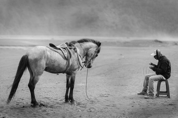 Take Five a moment Animal Themes Animals In The Wild Blackandwhite Day Domestic Animals Eastjava Editor Editorial  Full Length Horse Horses INDONESIA Landscape Mammal Mt.Bromo Nature One Animal Outdoors Sand Sand Dune Take A Break Working Animal