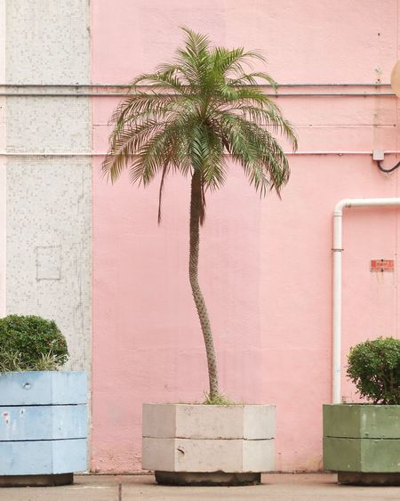 Potted plant against building at sidewalk in city