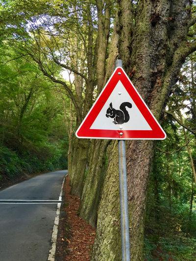 Vorsicht! Wilde Tiere! Eichhörnchen Squirrel Road Road Sign Road Warning Sign Sign Tree Warning Sign