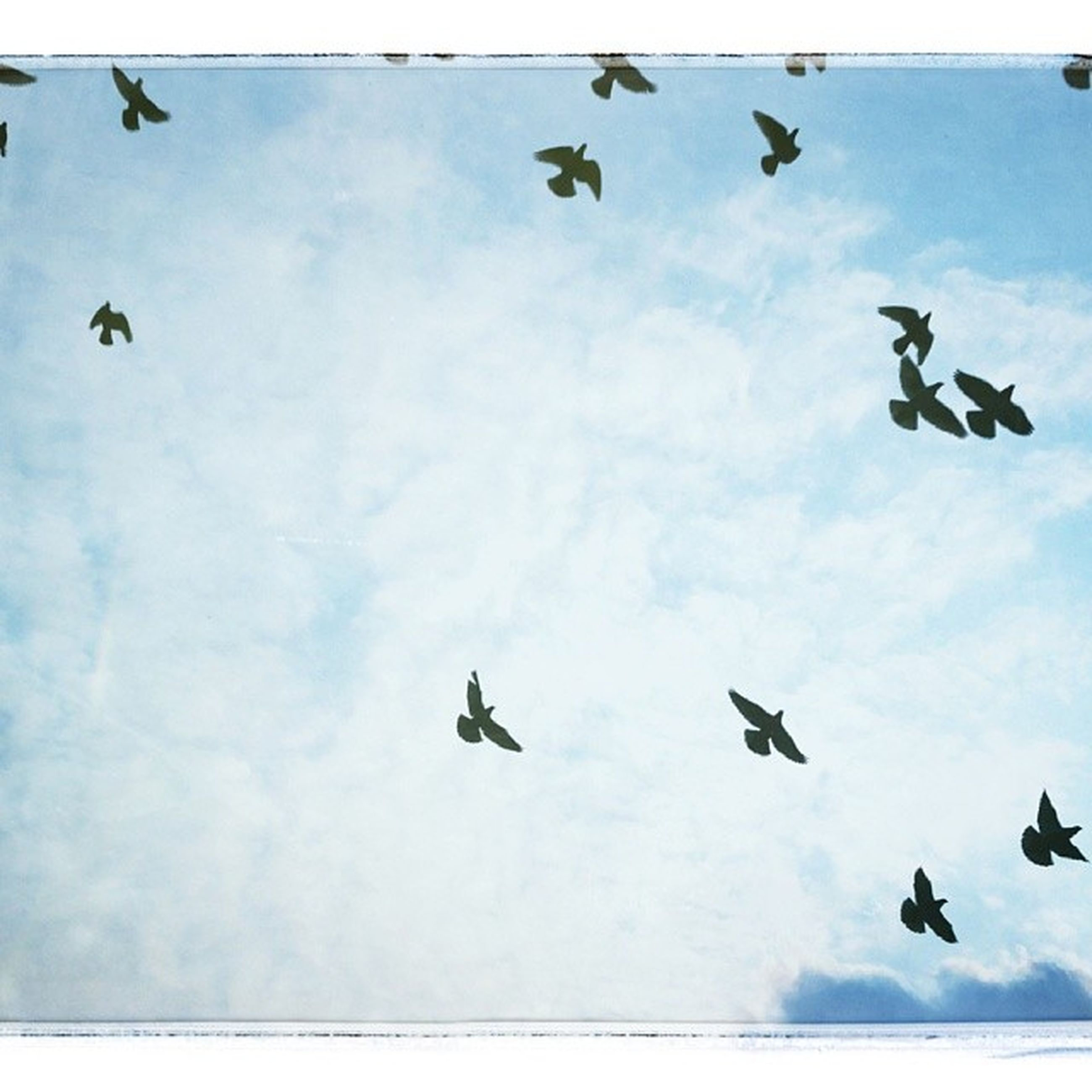 flying, low angle view, sky, mid-air, bird, cloud - sky, transportation, air vehicle, animal themes, wildlife, airplane, animals in the wild, cloud, motion, silhouette, mode of transport, cloudy, spread wings, on the move