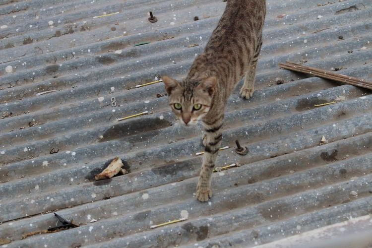 Animal Themes Animal Wildlife Day Domestic Cat Feline Mammal Nature No People One Animal Outdoors