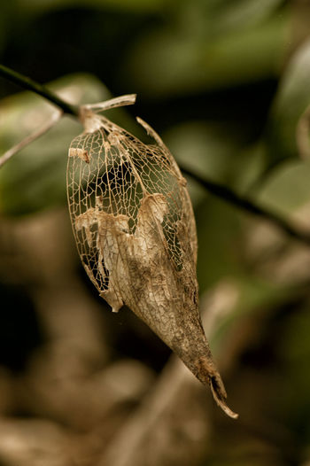 Decay Dry Leaves Decayed Beauty Decaying Dry Leaf Leaf Leaf Collection Leafs Photography Naturelovers No People