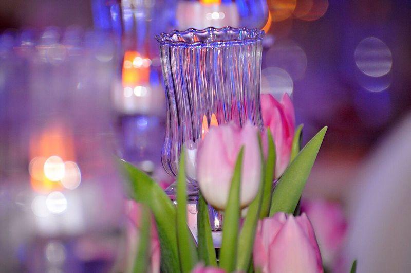 Close-up of illuminated flower