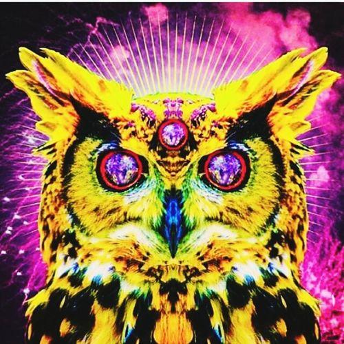 Wisdom ThirdEye Owl Art Physcodelic Trippy Spirit Animal