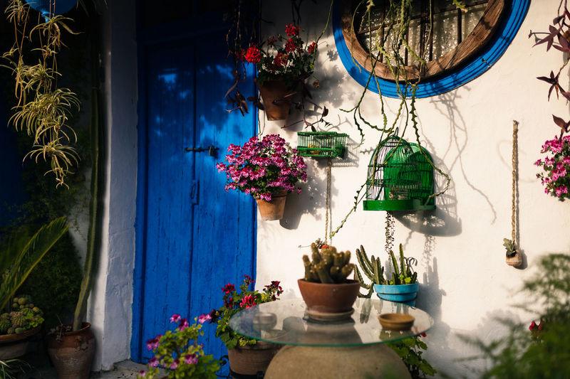 Flowers pots in yard