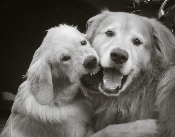 Canine Close-up Dog Domestic Animals Looking At Camera Love ♥ Pets Portrait