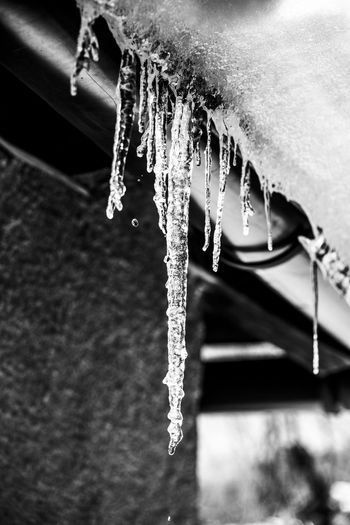 Close-up of icicles hanging over frozen water