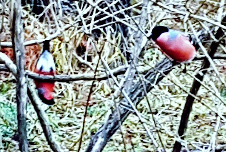 Mesmerized Winter Flirt What? Birds The Creative - 2018 EyeEm Awards Tree Red Branch Twig Cold Temperature Close-up
