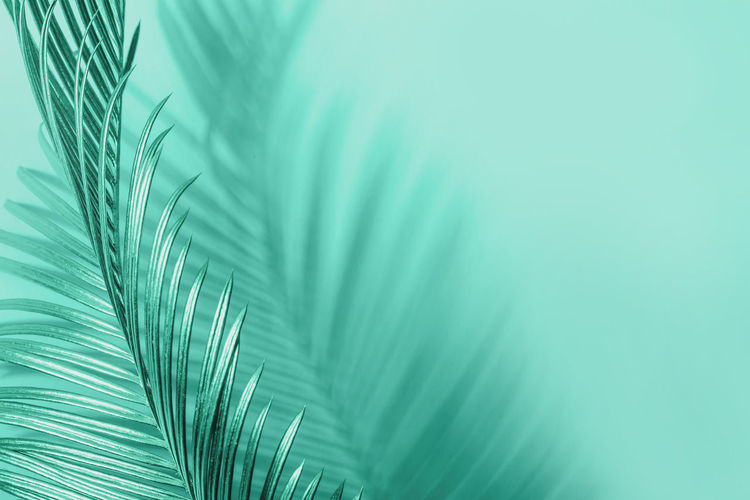 Close-up of palm tree against blue sky