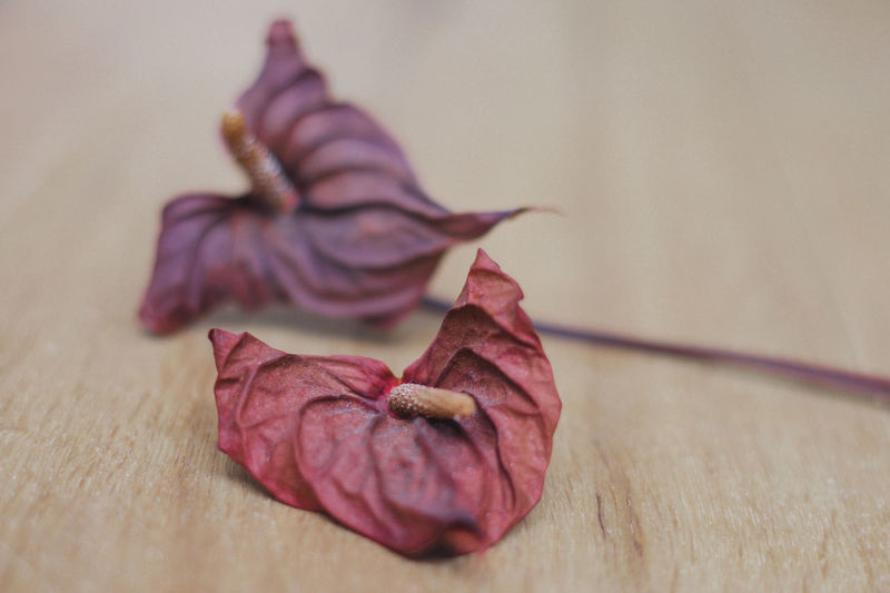 Dried flowers Red Beauty In Nature Close-up Dried Plant Dry Flower Flower Head Fragility Indoors  Nature No People Petal Purple Selective Focus Wilted Plant