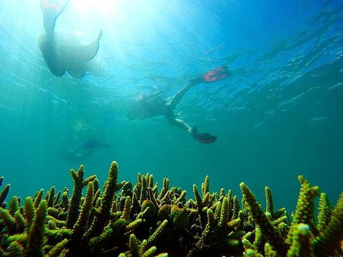 Let saves our corals. Agushariantophotography Corals Snorkling Underwater Thedorsaleffect Tanjungluar Swim Whitesandybeach