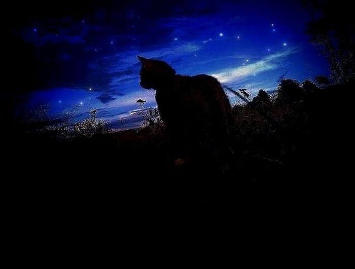 Cat GoodNight ❤✌ Enjoying Life World In My Eyes Nature Photography MyPhotography MIAcat Taking Photos